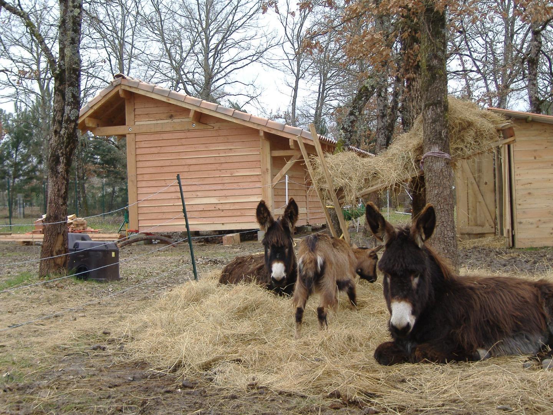 abri bois pour animaux Toulouse